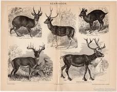 Szarvasok, Pallas nyomat 1898, eredeti, antik, vadászat
