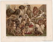 Kutyák, Pallas színes nyomat 1896, eredeti, antik
