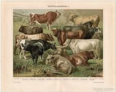 Szarvasmarhák I., Pallas színes nyomat 1896, eredeti, antik