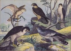 Német vagy osztrák művész : Ragadozó madarak