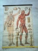 KIÁRUSÍTÁS! Antik anatómiai  térkép ' 86*127 cm