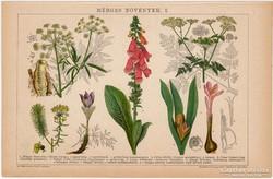 Mérges növények I. 1892, színes nyomat, eredeti, bürök