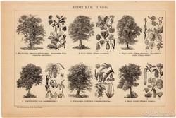 Erdei fák I. és II., egyszín nyomat 1892, eredeti, fa