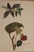 Benczúr Ida: Akvarell Mérete A 4 méret. Keret nélkül.