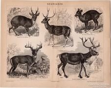 Szarvasok, Pallas nyomat 1898, eredeti, szarvas, vadászat