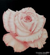 IRMA ENDREY: Pink rose painting; ENDREY IRMA: Virág festmény