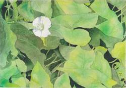 Egy virág - akvarell