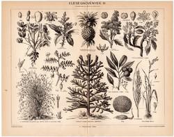 Eleségnövények III., egy színű nyomat 1896, eredeti, antik, eleség, mangó, licsi, bambusznád, fenyő