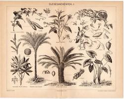 Eleségnövények I., egy színű nyomat 1896, eredeti, antik, eleség, batáta, kassavebokor, yamsgyökér