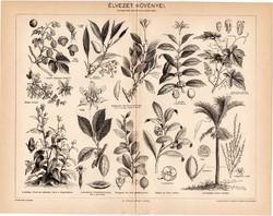Élvezet növényei, egy színű nyomat 1896, eredeti, antik, komló, kávé, szőlő, dohány, tea, kokacserje